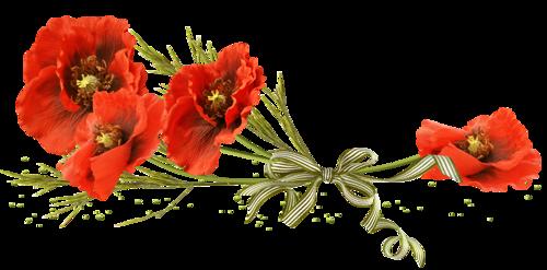 Résultat d'images pour gifs fleurs coquelicots
